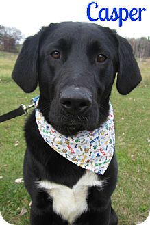 Labrador Retriever/Shepherd (Unknown Type) Mix Dog for adoption in Menomonie, Wisconsin - Casper
