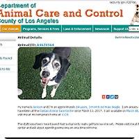Adopt A Pet :: Jackson - Creston, CA