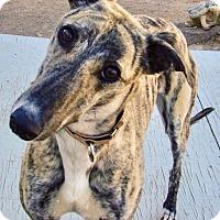 Adopt A Pet :: April - Tucson, AZ