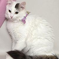 Adopt A Pet :: Missi - Kerrville, TX