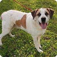 Adopt A Pet :: Bruno - Island Lake, IL