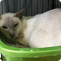 Adopt A Pet :: Arctic Gem - Warwick, RI