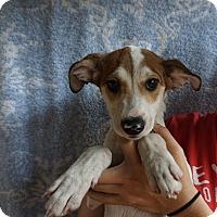 Adopt A Pet :: Crimson - Oviedo, FL