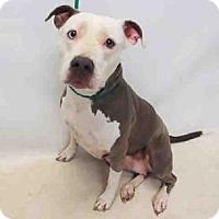 Adopt A Pet :: ELECTRA - Sanford, FL