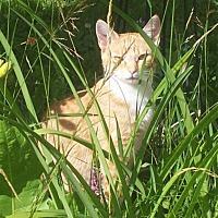 Adopt A Pet :: Bebe - 100 Mile House, BC