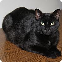 Adopt A Pet :: Tinker (Neutered) - Marietta, OH