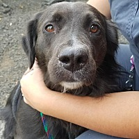 Adopt A Pet :: Joci Beth - Indianapolis, IN