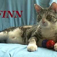Adopt A Pet :: Finn - League City, TX