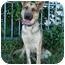 Photo 1 - German Shepherd Dog Dog for adoption in Los Angeles, California - Stella von Bremen