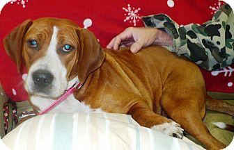 Redtick Coonhound Mix Dog for adoption in Eastpoint, Florida - Bandit
