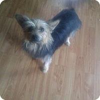 Adopt A Pet :: Chloe - Inglewood, CA