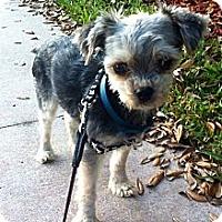 Adopt A Pet :: Shayne - Bunnell, FL