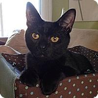 Adopt A Pet :: Panther - Rohnert Park, CA