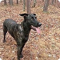 Adopt A Pet :: Anya in VA - Jamestown, CA