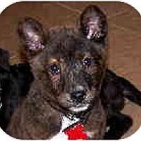 Adopt A Pet :: Koley - Scottsdale, AZ