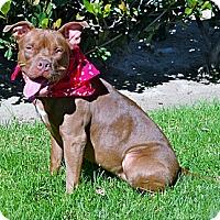 Adopt A Pet :: Cinnamon - Los Angeles, CA