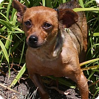 Adopt A Pet :: Mylo - Torrance, CA
