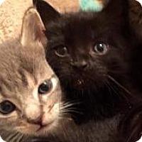 Adopt A Pet :: Zaxby - Reston, VA