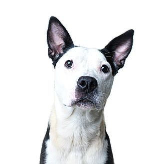 Pit Bull Terrier Mix Dog for adoption in Wilmington, Delaware - Ally