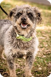 Terrier (Unknown Type, Medium) Mix Dog for adoption in Gainesville, Florida - Jack