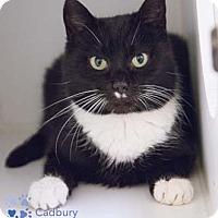 Adopt A Pet :: Cadbury - Merrifield, VA
