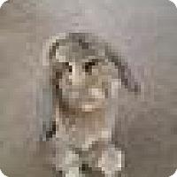 Adopt A Pet :: Django - Paramount, CA