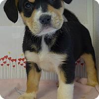 Adopt A Pet :: Eve - Manning, SC