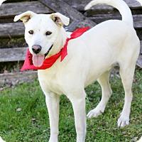 Adopt A Pet :: Duke - Dalton, GA