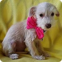 Adopt A Pet :: Adalaide - San Antonio, TX