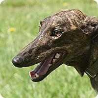 Adopt A Pet :: Gretchen - Portland, OR