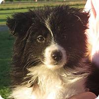 Adopt A Pet :: Bella - Greenville, RI