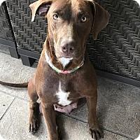 Adopt A Pet :: Mama Leoni - Spring, TX