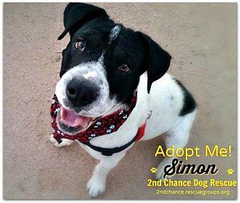 Pointer/Shar Pei Mix Dog for adoption in Queen Creek, Arizona - Simon