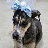 Adopt A Pet :: Navi - Picayune, MS