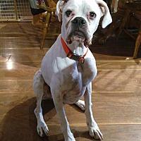 Adopt A Pet :: BEAN - Boise, ID
