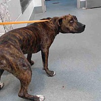 Adopt A Pet :: PIP - Albuquerque, NM