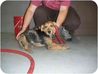 """Terrier (Unknown Type, Medium) Mix Dog for adoption in MARION, Virginia - """"Mister"""""""