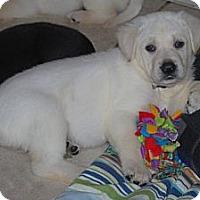Adopt A Pet :: Gracie - Minneola, FL