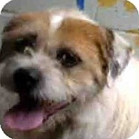 Adopt A Pet :: Courtesy Listing - Oakley, CA