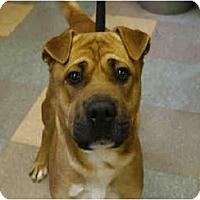 Adopt A Pet :: Zack - Newport, VT