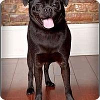 Adopt A Pet :: Petie - Owensboro, KY