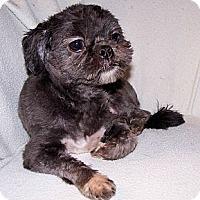 Adopt A Pet :: Sophie - San Angelo, TX