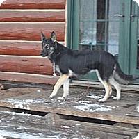 Adopt A Pet :: Ruby - Hamilton, MT
