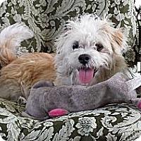 Adopt A Pet :: Sunshine - San Dimas, CA