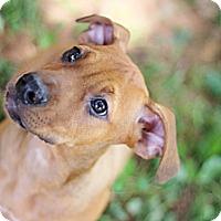 Adopt A Pet :: Jane - Reisterstown, MD