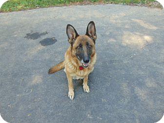 German Shepherd Dog Mix Dog for adoption in Greeneville, Tennessee - Bella