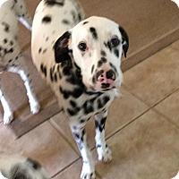 Adopt A Pet :: Spock - Newcastle, OK