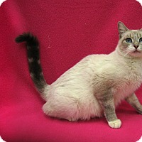 Adopt A Pet :: Jewel - Redwood Falls, MN