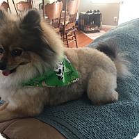 Adopt A Pet :: Harley Davidson - Whittier, CA