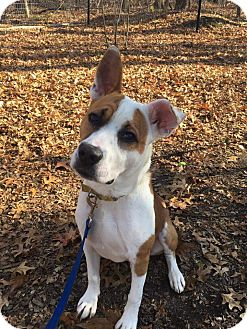 Mixed Breed (Medium) Mix Dog for adoption in Walden, New York - Trevor